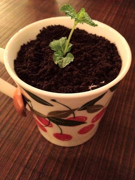 【溫古咖啡 】WENGU CAFE。盆栽奶茶初體驗 @凱的日本食尚日記