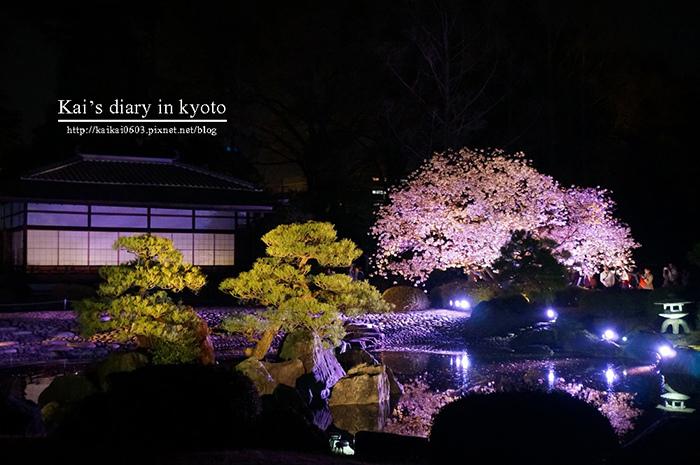 【2014京阪賞櫻】花見二條城。極致絢麗的必看夜櫻! @凱的日本食尚日記