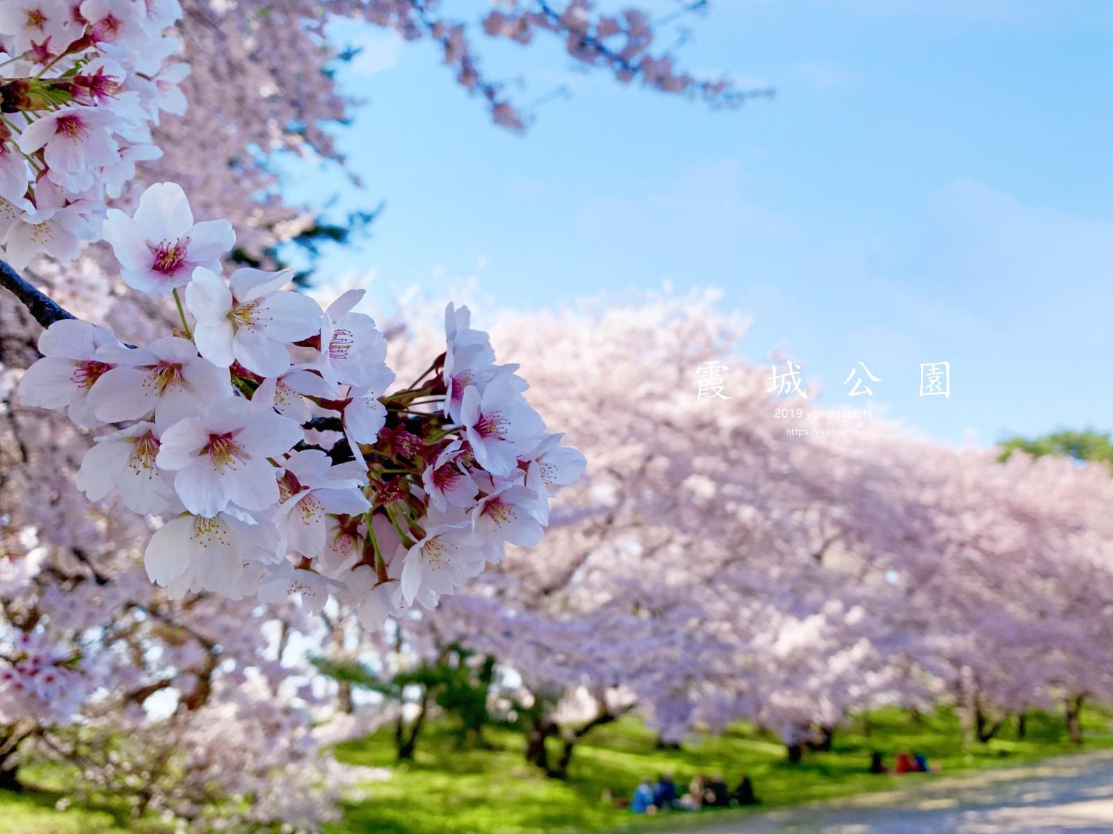 ☆【2019。山形】山形霞城公園櫻花大滿開。日櫻夜櫻都壯觀 @凱的日本食尚日記