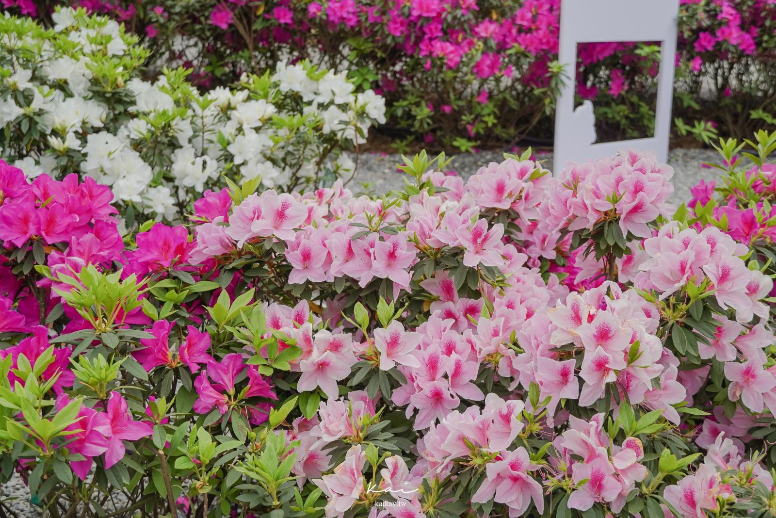 ☆【台北|大安森林公園】搭捷運賞花趣!城市裡的繡球花園