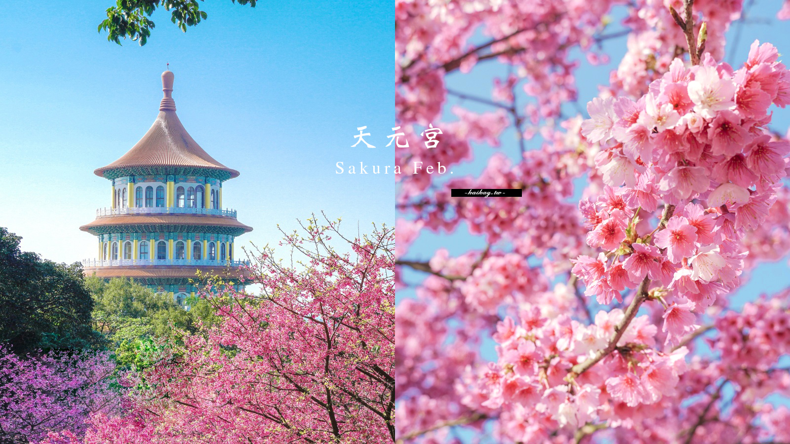 閱讀文章:☆【新北|淡水】2021最新花況!天元宮三色櫻、吉野櫻接力盛放。捷運、公車、停車場資訊
