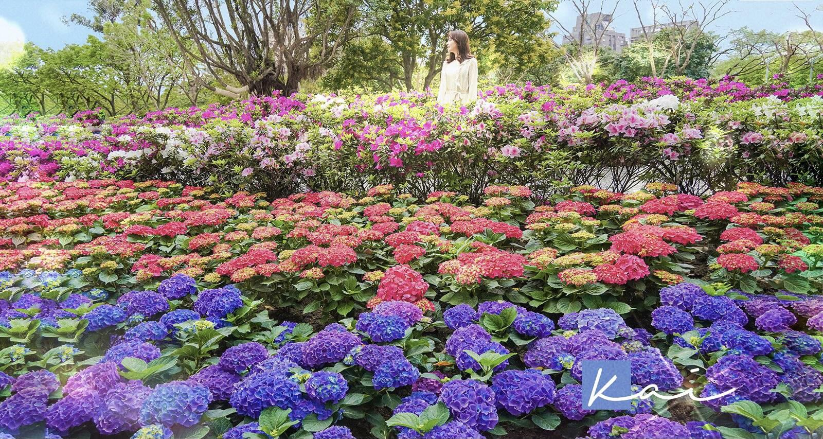 網站近期文章:☆【台北|大安森林公園】搭捷運賞花趣!城市裡的繡球花園