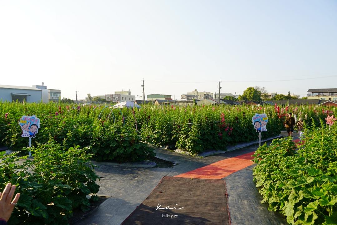 ☆【彰化景點】2021員林蜀葵花季開跑。10000株蜀葵壯闊花海「免費參觀」