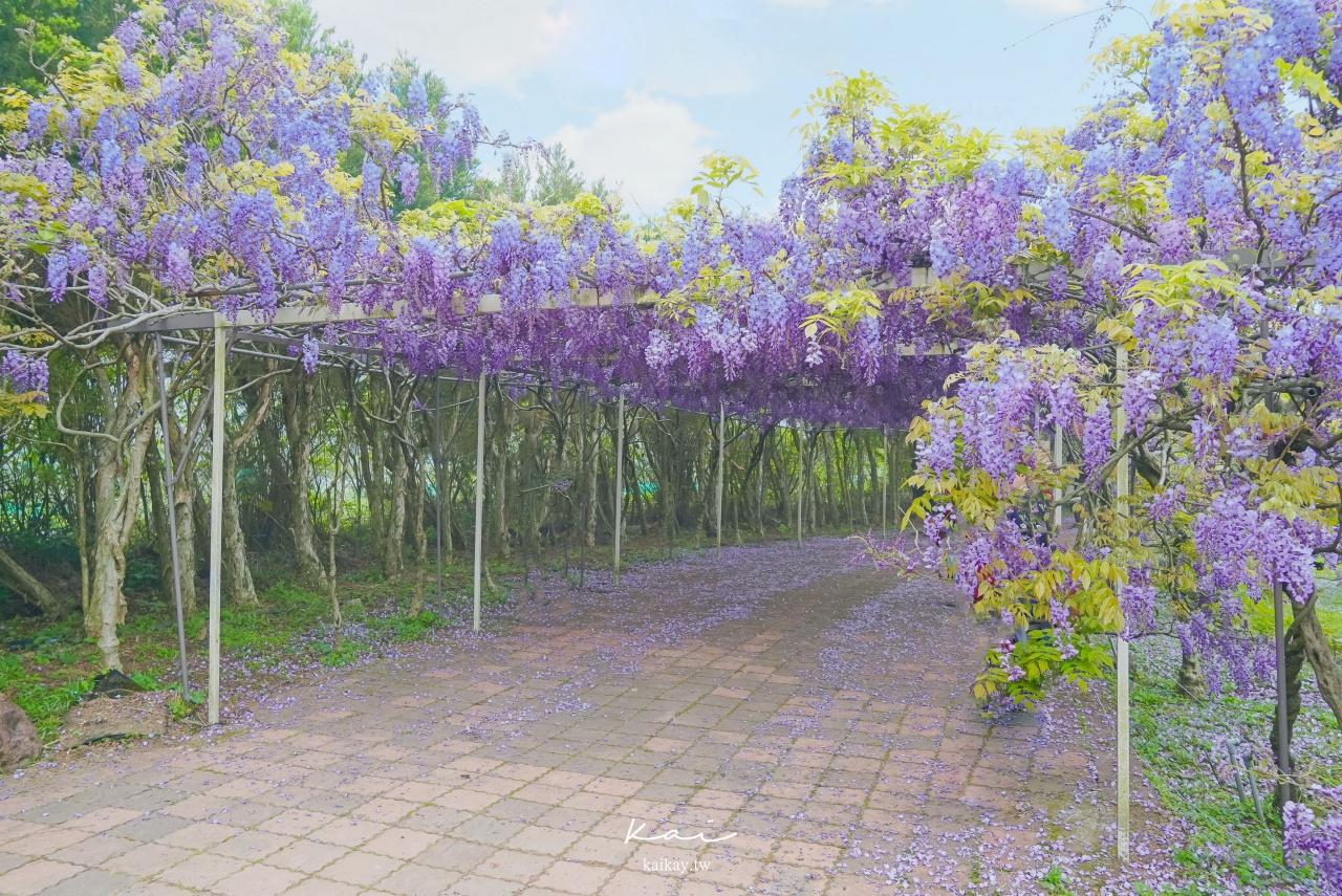 ☆【新北|淡水】淡水紫藤咖啡園夢幻紫色隧道。2021最新花況!捷運、公車、停車場資訊