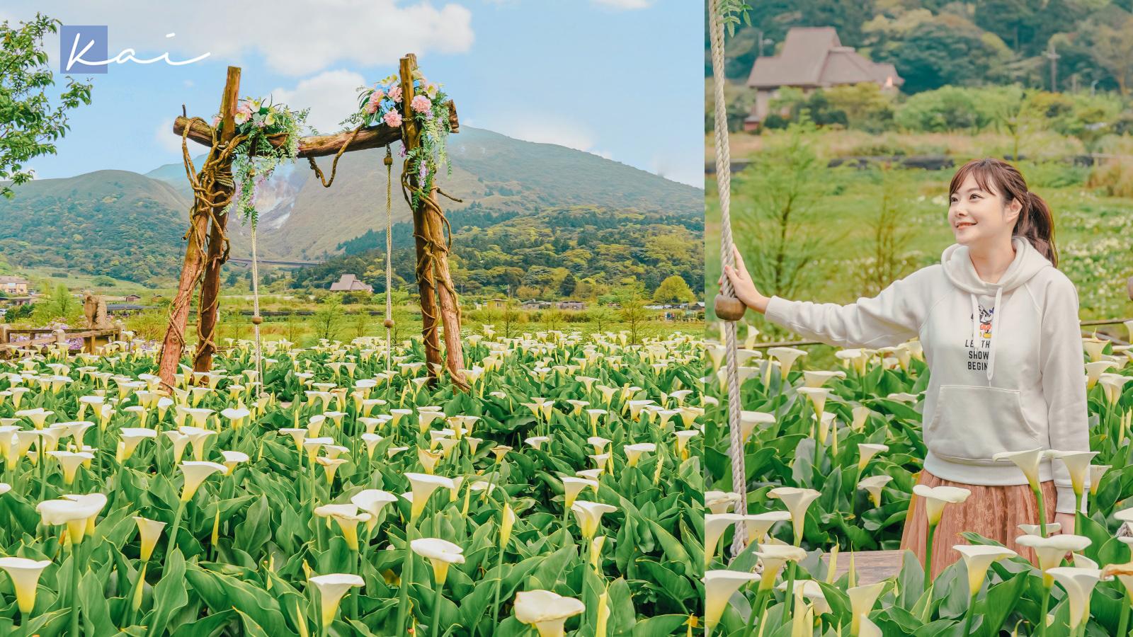 即時熱門文章:☆【台北|陽明山】名陽匍休閒農莊。海芋園中的森林小木屋、盪鞦韆。2021海芋花況