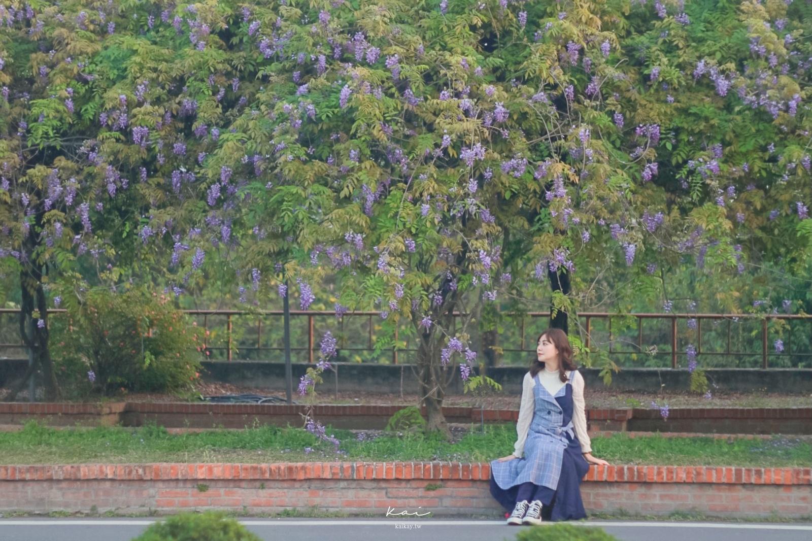 ☆【彰化景點】紫藤小秘境:浪漫紫色廊道|北斗河濱公園