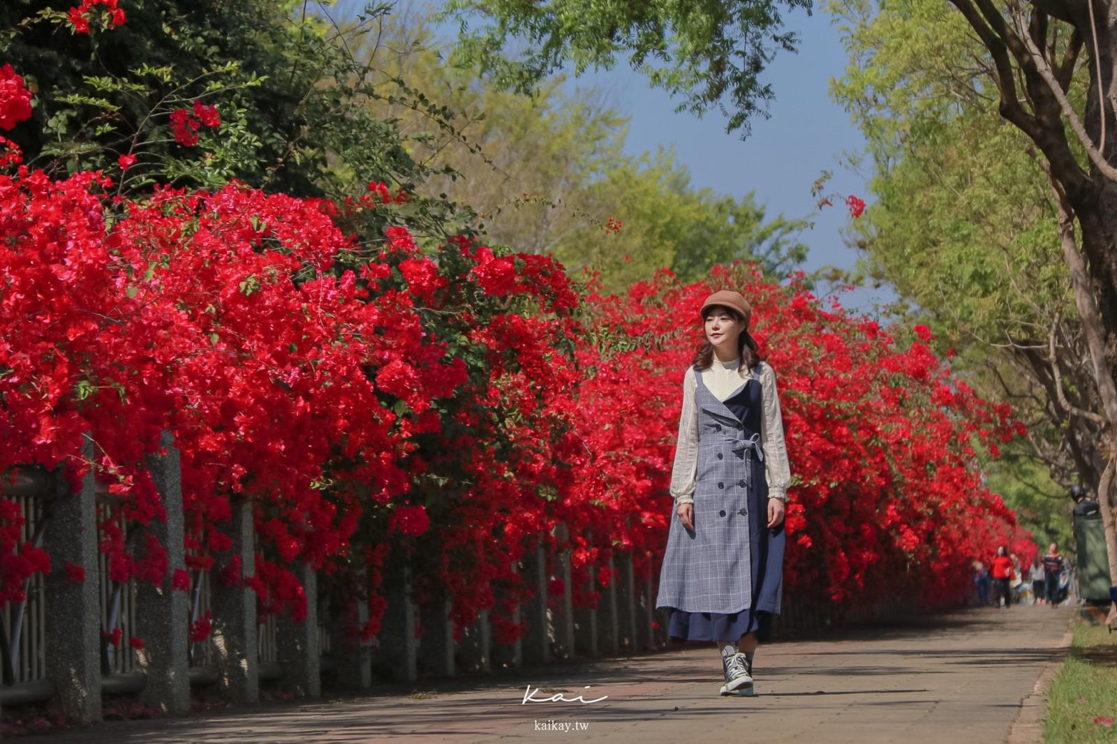 ☆【台中景點】東大公園九重葛花海再美一波。IG美照必拍角度全攻略