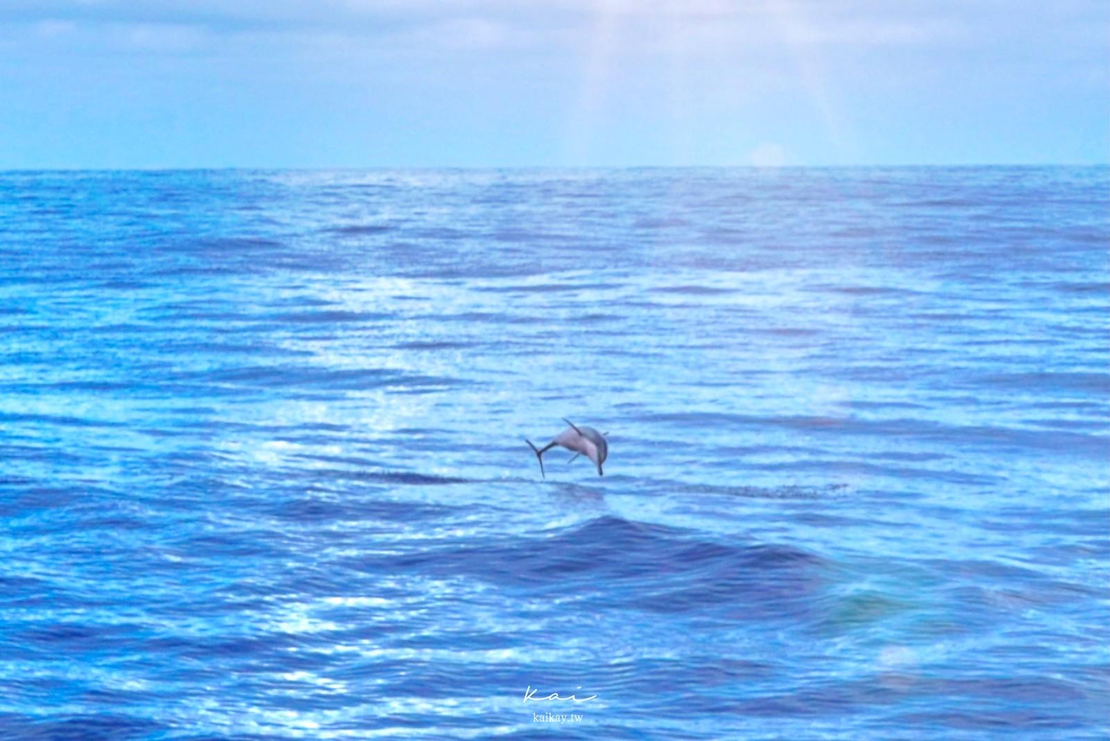 ☆【花蓮】發現新花蓮:夜訪流螢、碧海逐鯨。精選十大好玩好拍景點懶人包